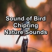 Sound of Bird Chipring Nature Sounds by Spa Relax Music
