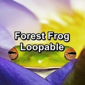 Forest Frog Loopable de Frog Sounds
