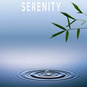 Serenity by Color Noise Therapy