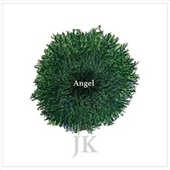 Angel by J K