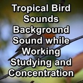 Tropical Bird Sounds Background Sound while Working Studying and Concentration by Rain Radiance