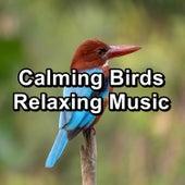 Calming Birds Relaxing Music fra Animal and Bird Songs (1)