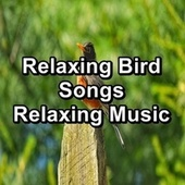 Relaxing Bird Songs Relaxing Music de Serenity Spa: Music Relaxation
