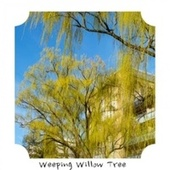 Weeping Willow Tree de Various Artists