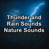 Thunder and Rain Sounds Nature Sounds de Life Sounds Nature