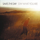 Stay What You Are de Saves the Day