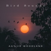 Active Woodland by Bird Sounds