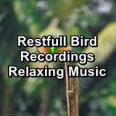 Restfull Bird Recordings Relaxing Music by Bird Sounds