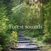 Forest Sounds by Relaxing Sounds