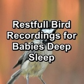 Restfull Bird Recordings for Babies Deep Sleep fra Animal and Bird Songs (1)
