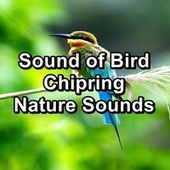 Sound of Bird Chipring Nature Sounds by The Birds