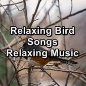 Relaxing Bird Songs Relaxing Music fra Animal and Bird Songs (1)