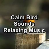 Calm Bird Sounds Relaxing Music by S.P.A