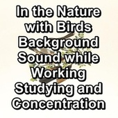 In the Nature with Birds Background Sound while Working Studying and Concentration by S.P.A