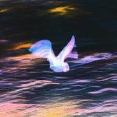 Pigeons de Les Louanges