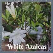White Azaleas by Various Artists