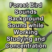 Forest Bird Sounds Background Sound while Working Studying and Concentration by Spa Relax Music