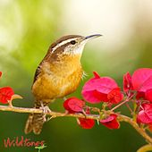 Popular Backyard Birds Calls and Songs by Wildtones - Bird Calls and Bird Songs
