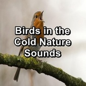 Birds in the Cold Nature Sounds fra Animal and Bird Songs (1)