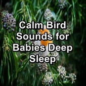 Calm Bird Sounds for Babies Deep Sleep by Loopable Birds