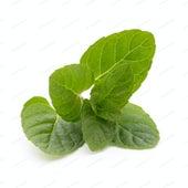 Mint by Choclair