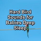 Hard Bird Sounds for Babies Deep Sleep by Spa Relax Music