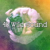 48 Wild Sound de Lullaby Land