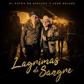 Lagrimas De Sangre (En Vivo) by José Guicho
