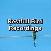 Restfull Bird Recordings by Bird Sounds