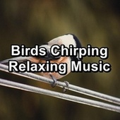Birds Chirping  Relaxing Music by Spa Relax Music