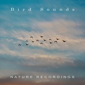 Nature Recordings by Bird Sounds