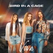 Bird in a Cage von Viva