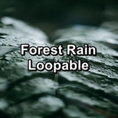 Forest Rain Loopable by Nature Soundscape