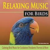 Relaxing Music for Birds (Calming Bird Music for Cockatoos, Parakeets, Parrots & More) by The Kokorebee Sun
