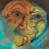 Every Wrinkle Tells a Story de Pernille Schiøtz