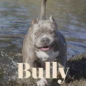Bully by Various Artists