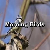 Morning Birds by Spa Music (1)