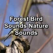 Forest Bird Sounds Nature Sounds fra Animal and Bird Songs (1)