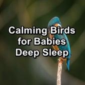 Calming Birds for Babies Deep Sleep by Nature Bird Sounds