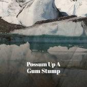 Possum Up A Gum Stump de Various Artists