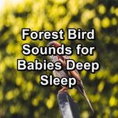 Forest Bird Sounds for Babies Deep Sleep by Bird Sounds