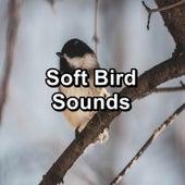 Soft Bird Sounds de Yoga
