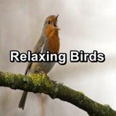 Relaxing Birds von Yoga Music