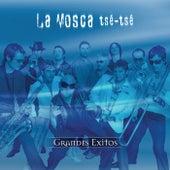 Serie De Oro by La Mosca Tse Tse