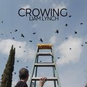 Crowing by Liam Lynch