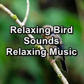 Relaxing Bird Sounds Relaxing Music by Nature Bird Sounds