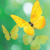 Goodbye Yellow Butterfly von The Away Team