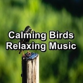 Calming Birds Relaxing Music by The Birds