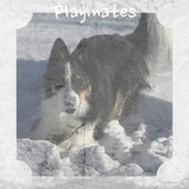 Playmates by Various Artists