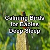 Calming Birds for Babies Deep Sleep by S.P.A